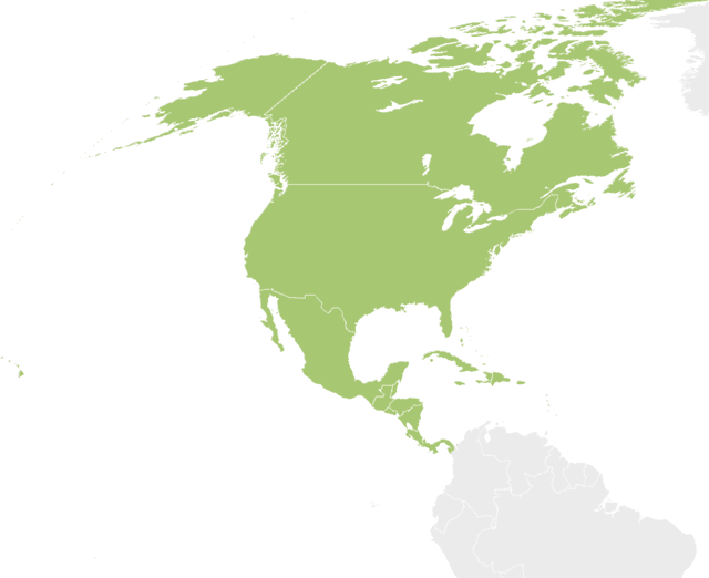 North America
